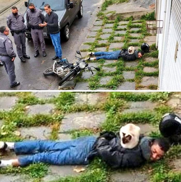 кошка сидит на спине у лежащего на земле мужчины