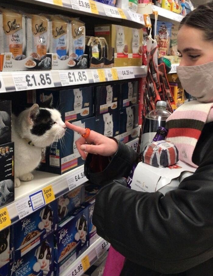 кот сидит на полке с кормом в супермаркете