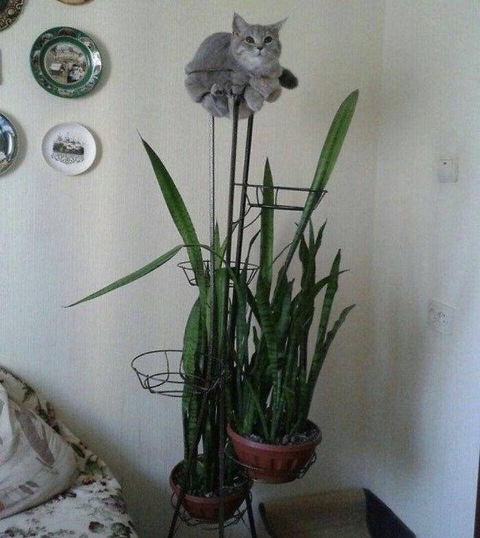 серый кот сидит на подставке с цветами