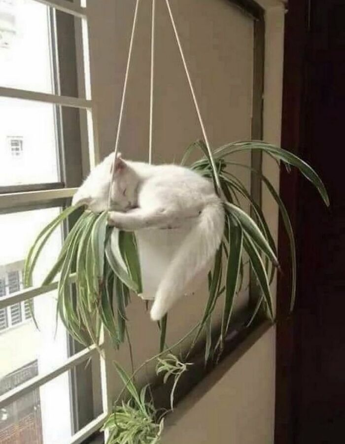 белый кот спит в цветке