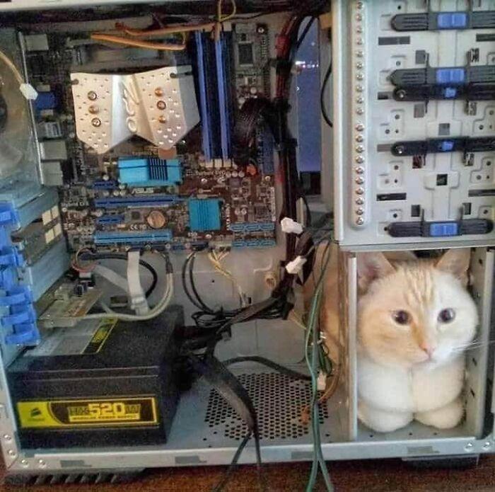 кот сидит в системном блоке