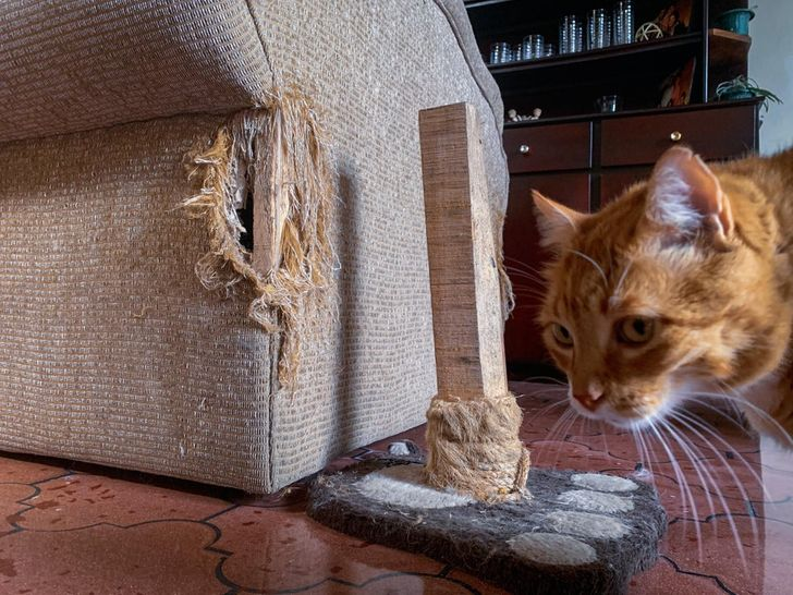рыжий кот рядом с диваном