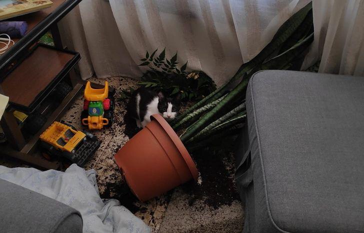горшок с цветком на полу и черно-белый кот