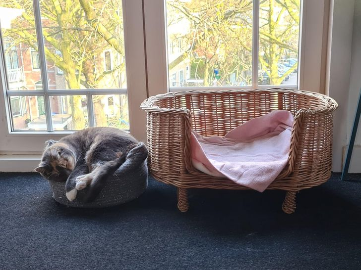 кошка спит под окном