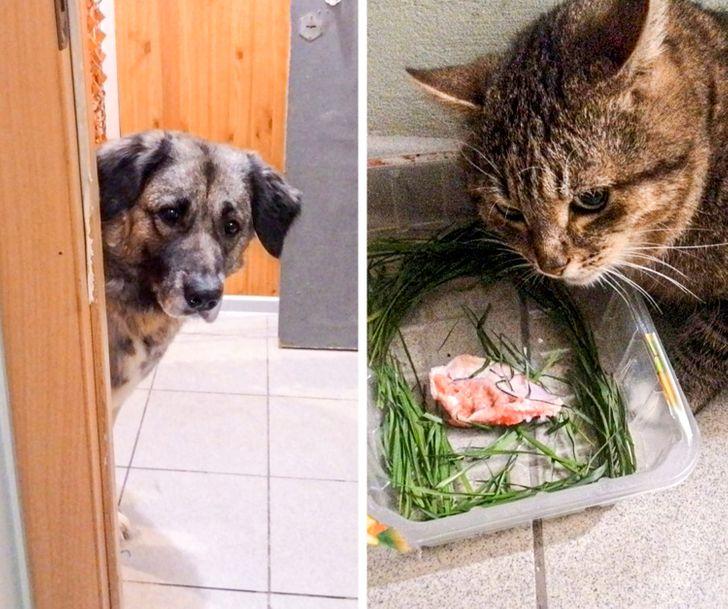 10+ фото животных, застуканных на воровстве вкусняшек Приколы,еда,животные,коты,собаки