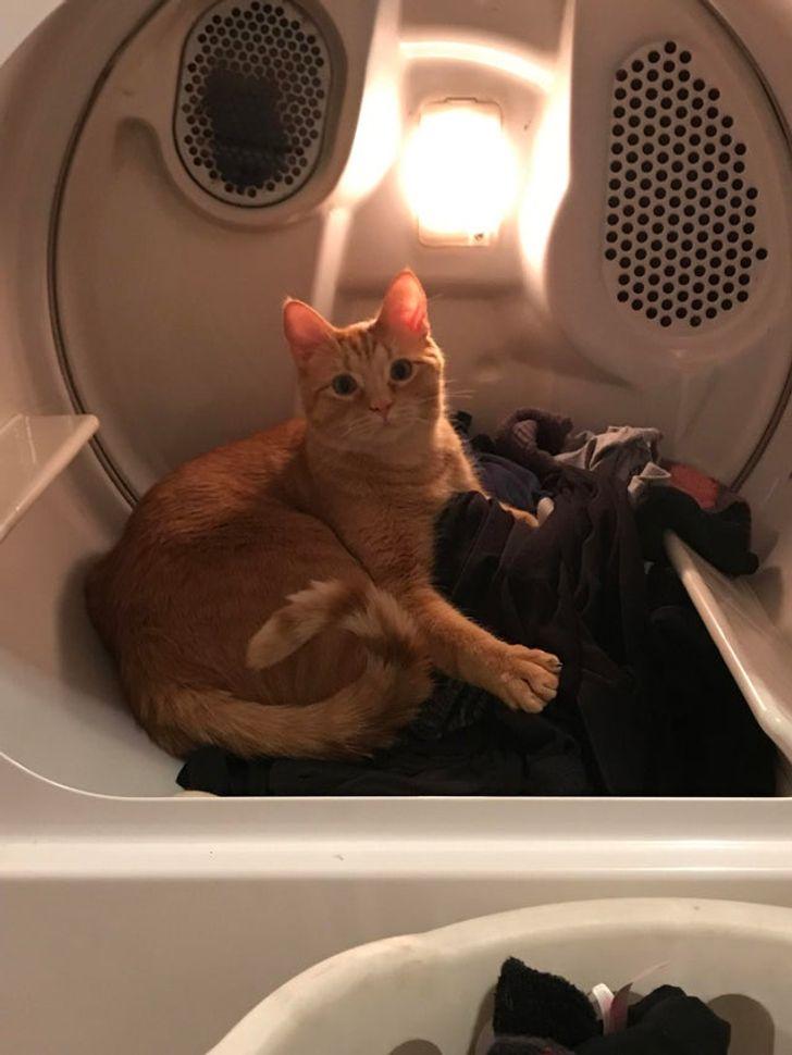 рыжий кот в барабане стиральной машины