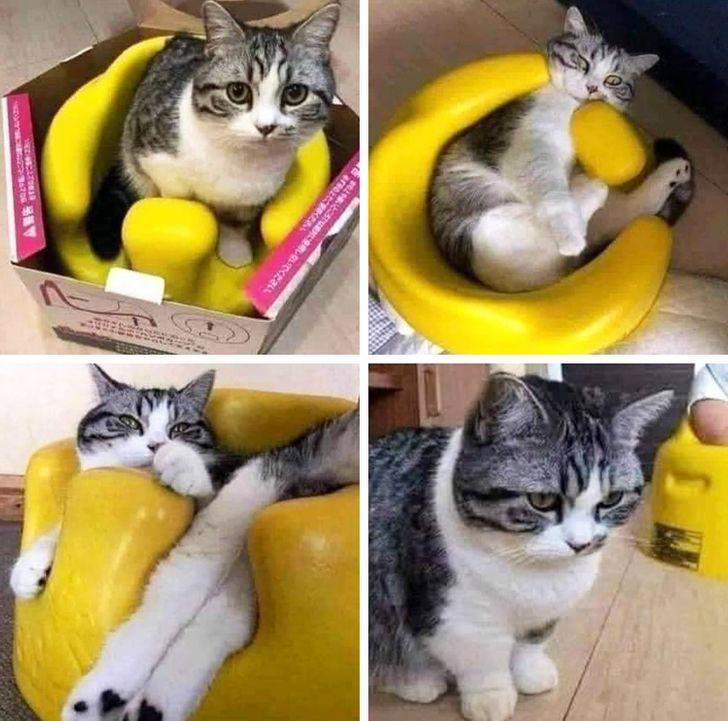 полосатый кот в желтом горшке