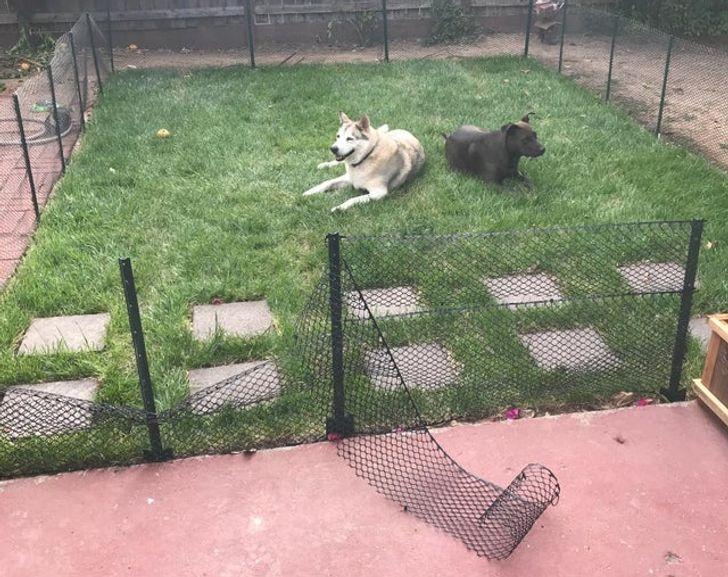 две собаки лежат на газоне