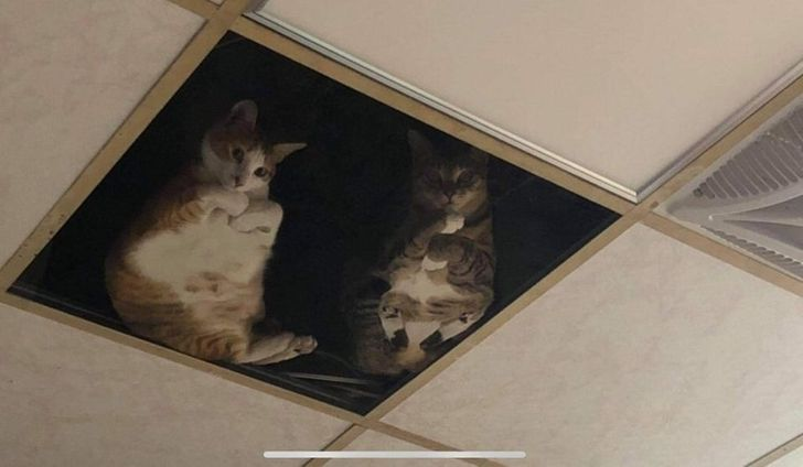 две кошки сидят на крыше