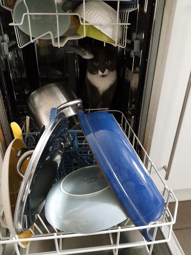 черный кот сидит в посудомоечной машине