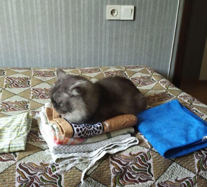 кошка сидит на стопке белья