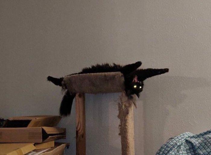 черная кошка потягивается на спине