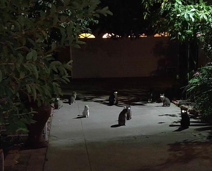 коты сидят в темноте на улице