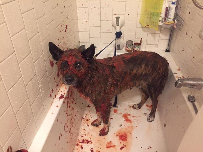 собака в томатном соке в ванне