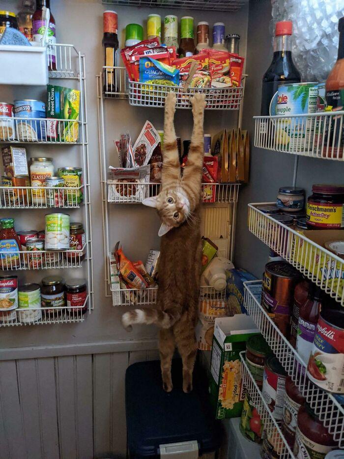рыжий кот в кладовке