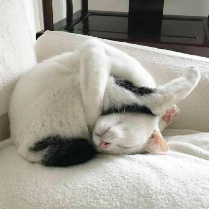 белый кот спит на диване