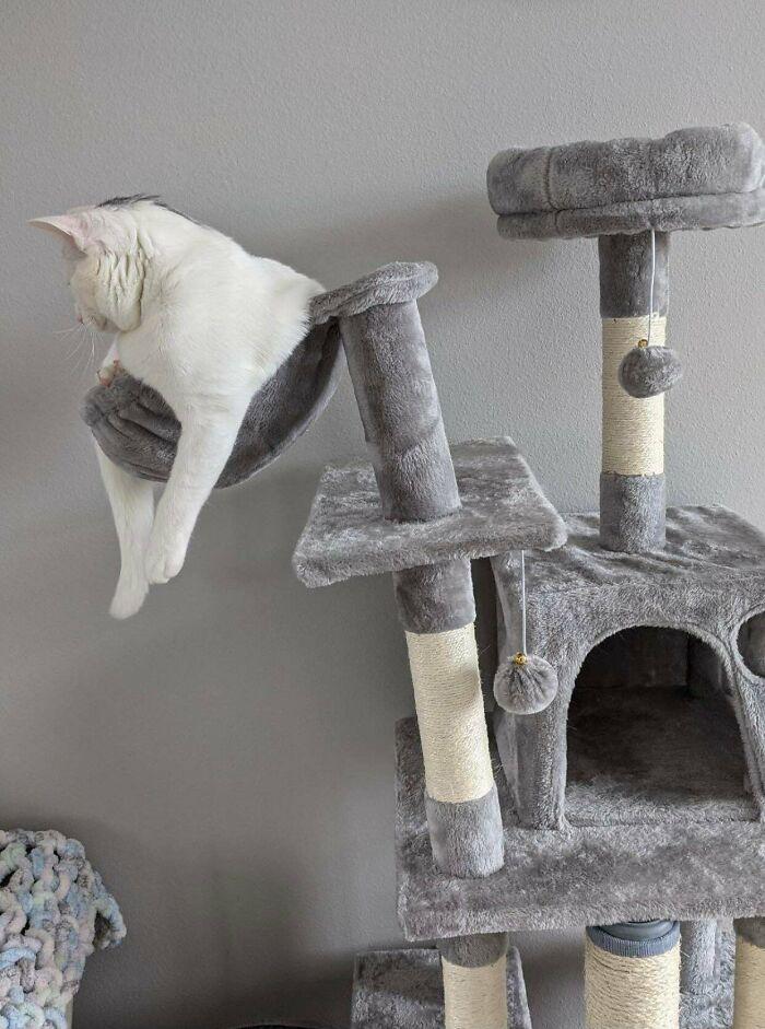 белый кот лежит на кошачьем домике