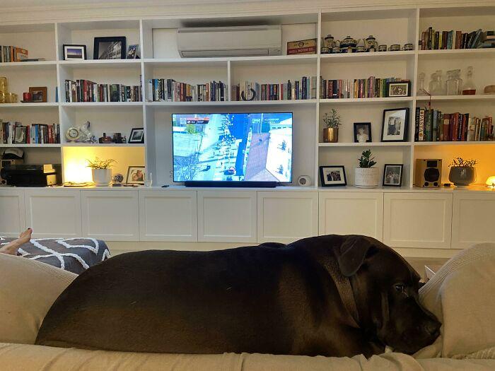черный пес на диване