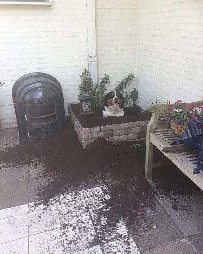 пес сидит в клумбе