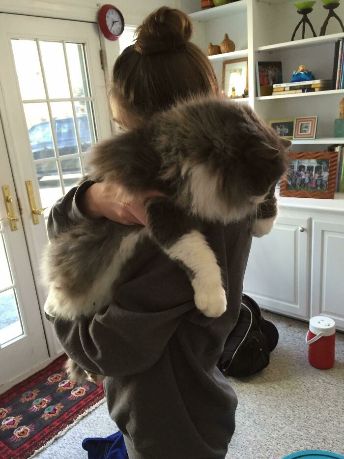 девушка обнимает большого кота