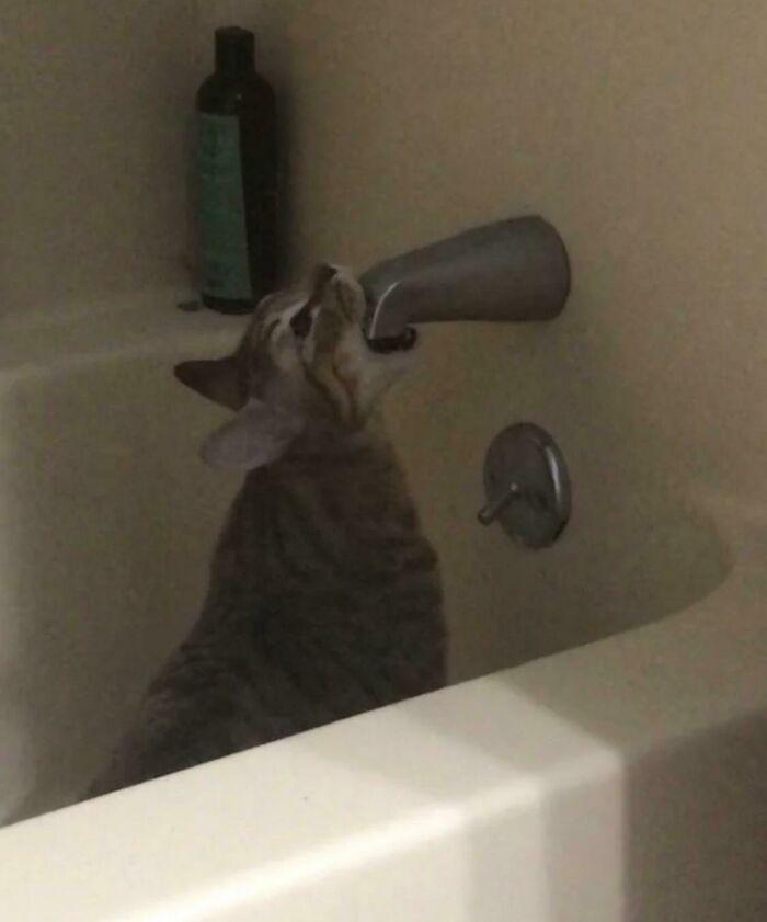 кот сидит в ванне