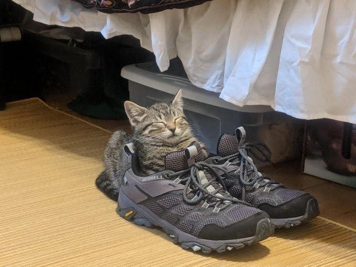 полосатый котенок спит на кроссовках