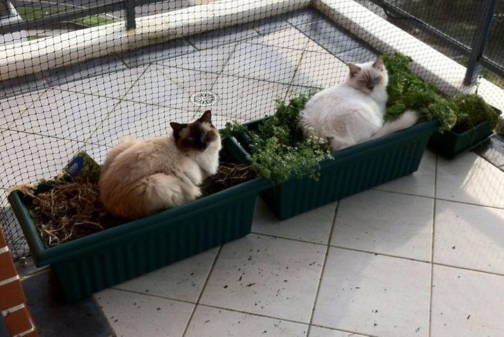 коты сидят в цветочных горшках