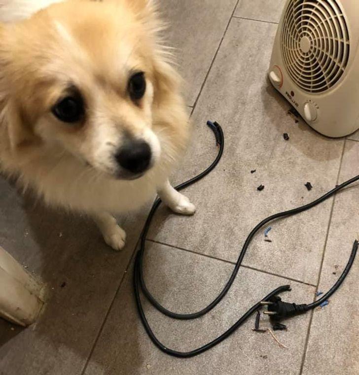 собака и шнур