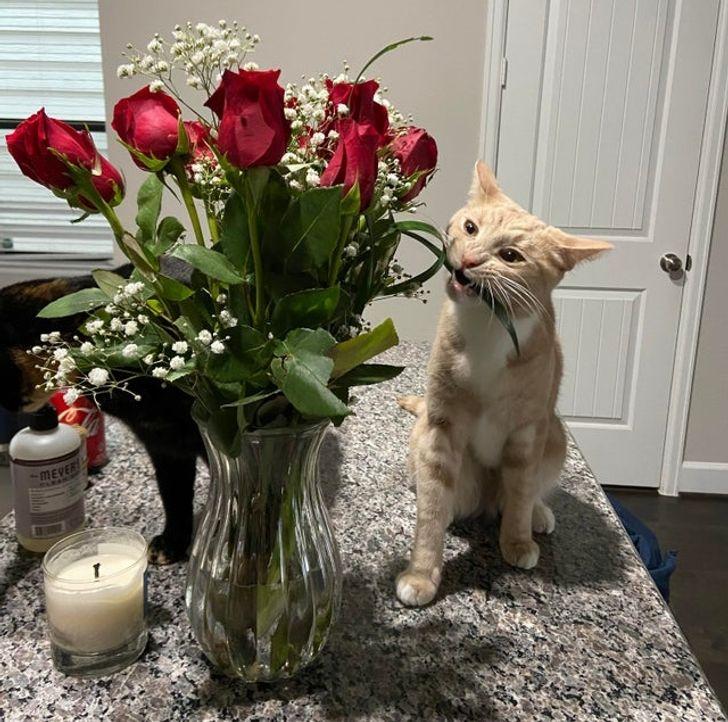 рыжий кот и букет красных роз