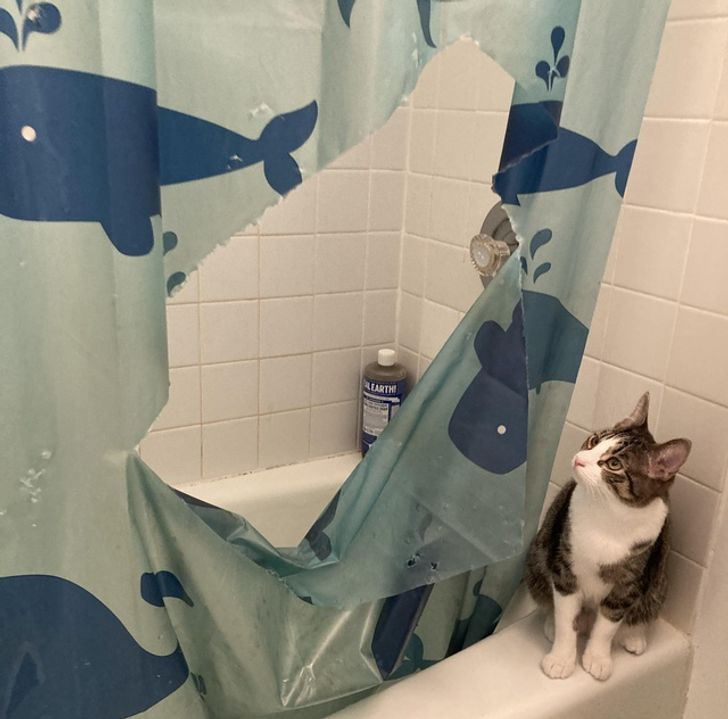 кот смотрит на порванную занавеску в ванной