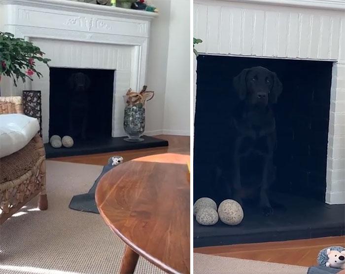 черная собака сидит в камине