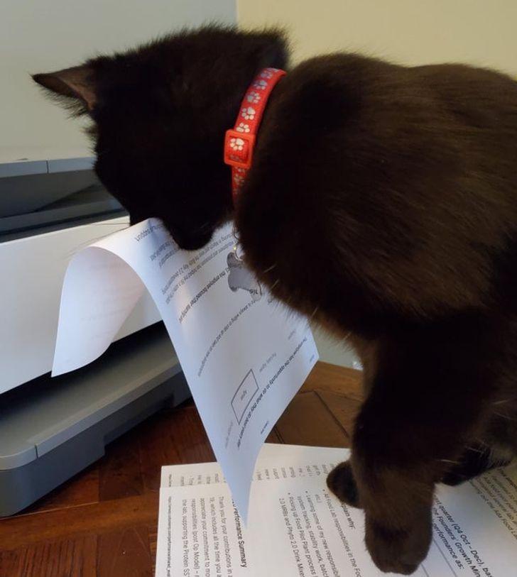 черный кот с листом бумаги в зубах