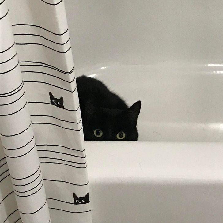 черный кот сидит в ванне