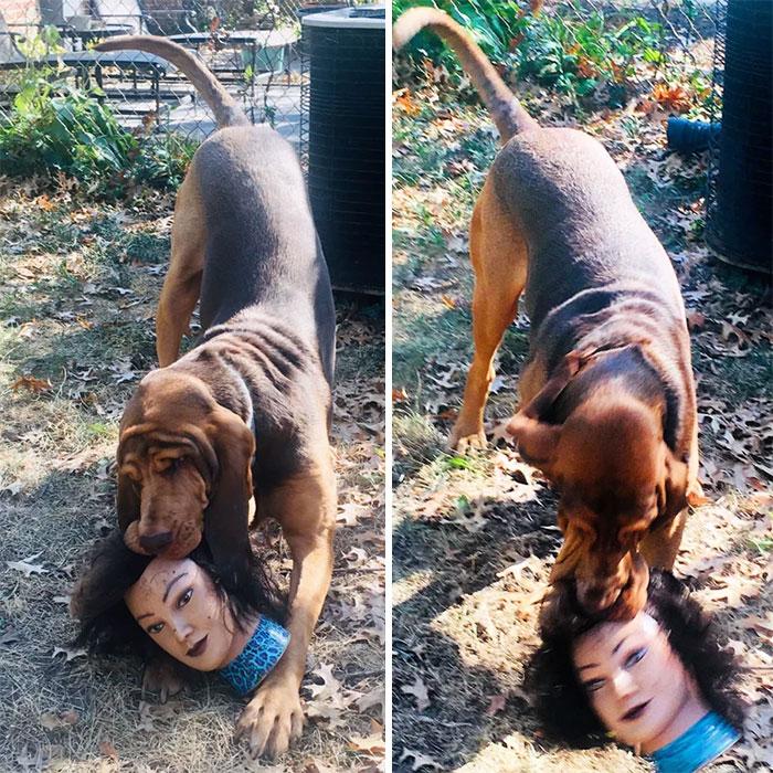 пес с головой куклы в зубах