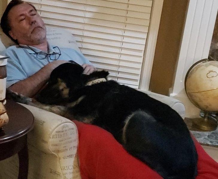 черная собака спит на коленях у мужчины