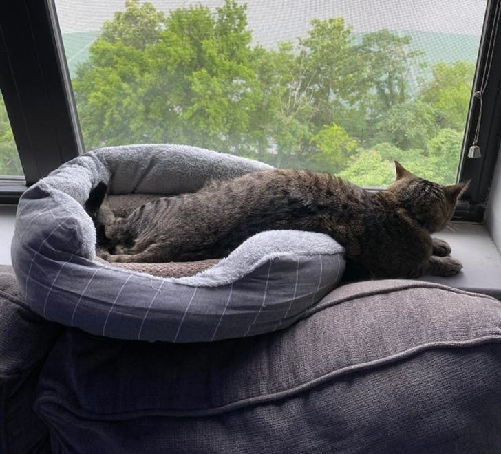 полосатый кот в лежанке