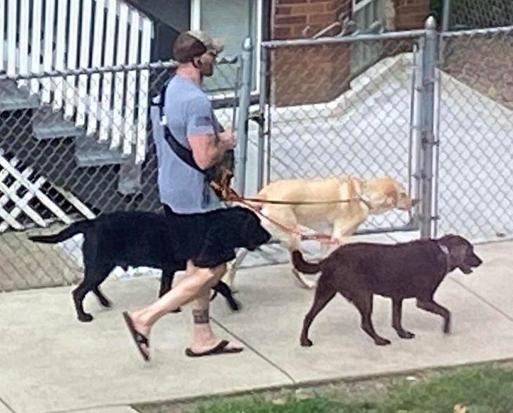 мужчина выгуливает трех собак