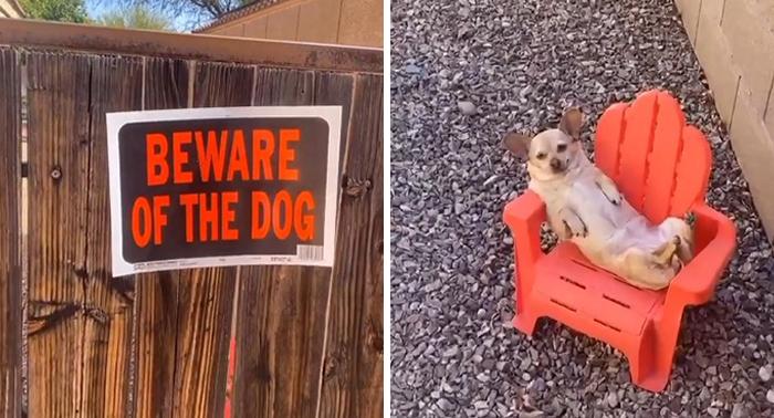 собака сидит на маленьком стуле
