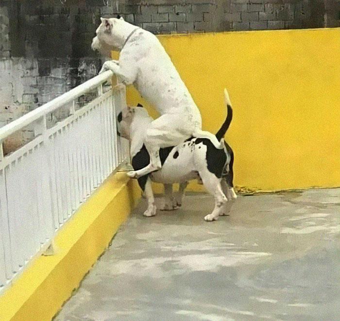 собака сидит на спине у другой собаки