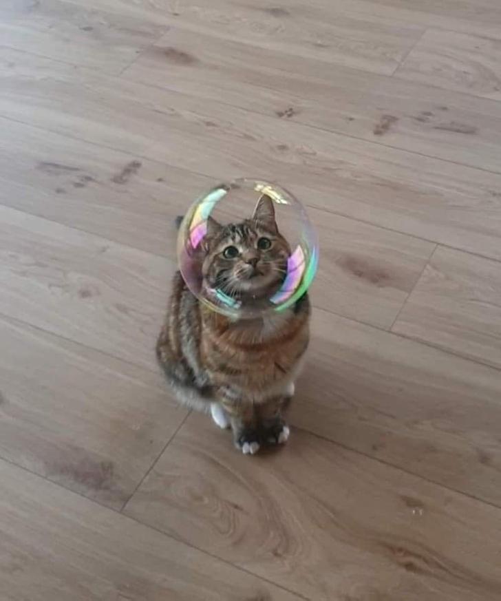 кот смотрит на мыльный пузырь
