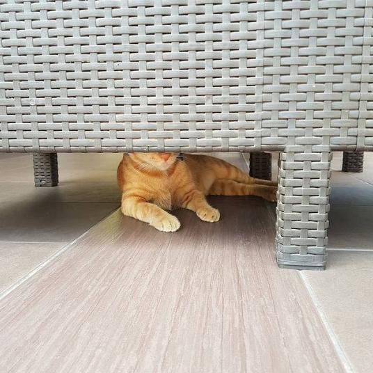 рыжий кот лежит под креслом