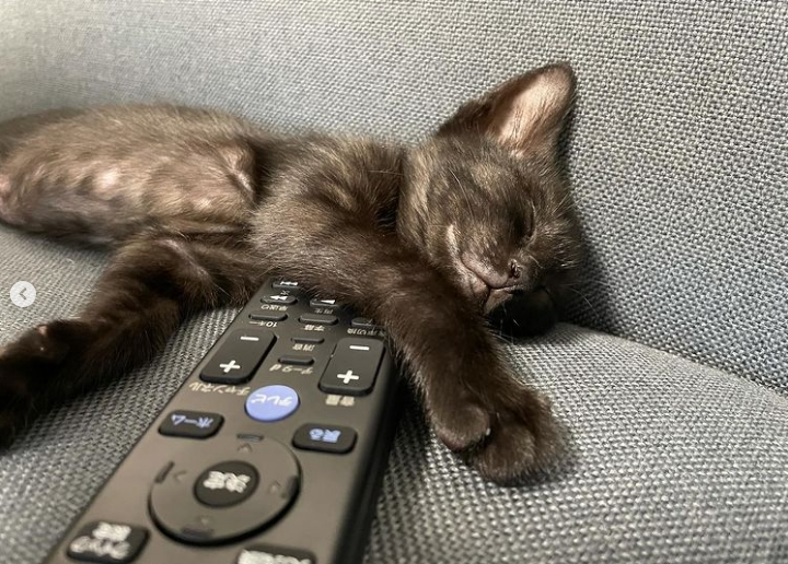 котенок спит на диване возле пульта