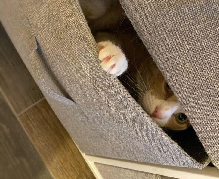 кот прячется в диване