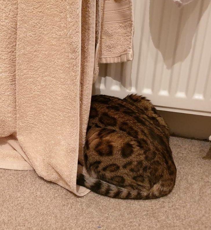 кот сидит за полотенцем на батарее