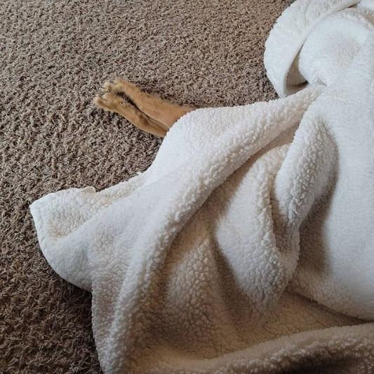 собака под белым одеялом