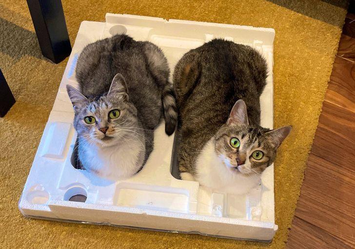 два кота сидят на пенопласте