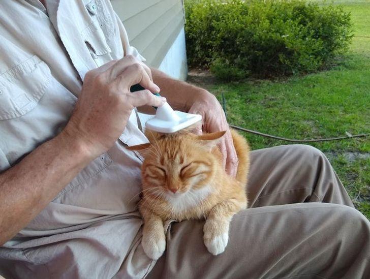 мужчина гладит рыжего кота на коленях