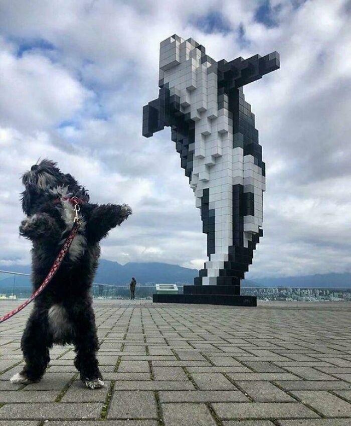собака стоит на фоне скульптуры кита