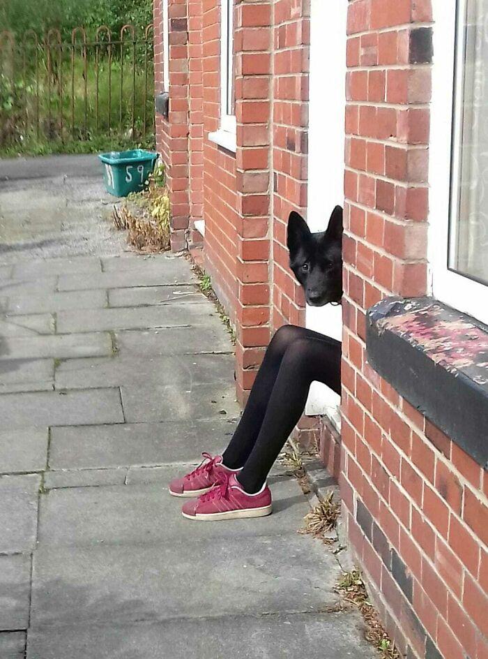 собака выглядывает из двери