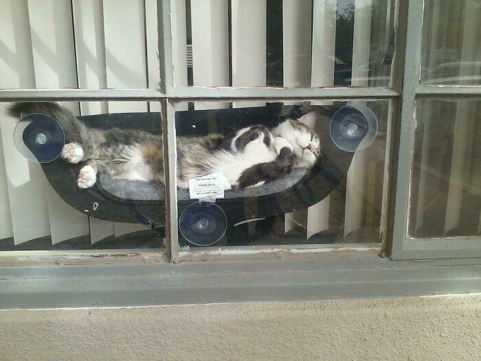 кот спит в гамаке на окне